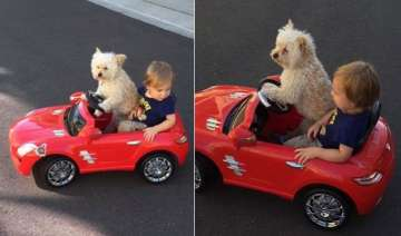 captured dog flawlessly drives toddler around in...