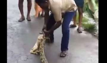 watch kerala man squeezing out a goat from a...