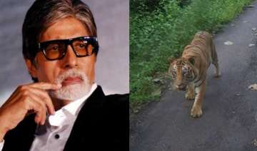 omg amitabh bachchan chased by a tiger for 4 km...