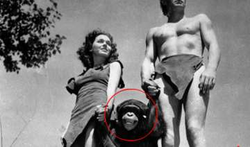 cheetah the chimp from 1930s tarzan flicks dies -...