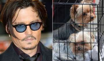 johnny depp in trouble could face 10 year jail...