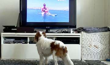 dogtv first 24 hour cable tv network for dogs -...