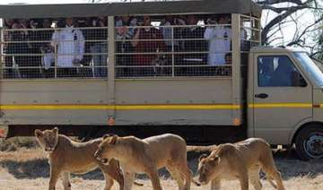 german world cup team hides from lions in safari...