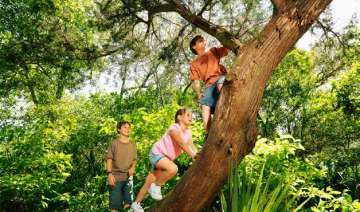 after yoga climb a tree to boost your memory -...