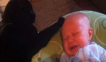 canadian cat puts crying baby to sleep in youtube...