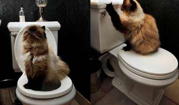 cats can be trained to use the toilet - India TV