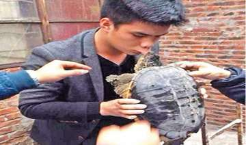 chinese man kisses turtle goodbye lands in...