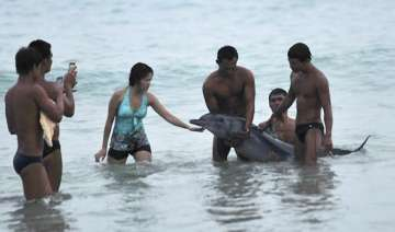 dolphin dies in china after tourists manhandle -...