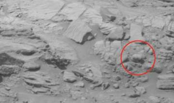 baby bear spotted on mars un to be alerted watch...