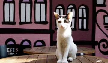 cat culture thrives in istanbul - India TV