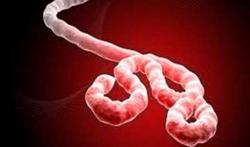 new tool predicts ebola infection risk - India TV