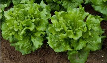 scientists plan to grow lettuce on mars - India TV