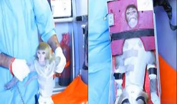 iran to send another monkey into space - India TV