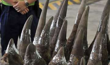 vietnam craves rhino horn costs more than cocaine...