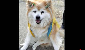 world s oldest dog dies in japan at age 26 -...