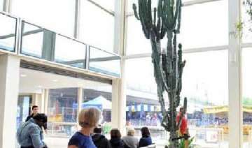 16 foot cactus severely injures us city worker -...