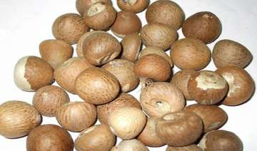 28 years on betel nut pulled out of man s lung -...