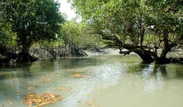 bengal comes up with new plans for sunderbans -...