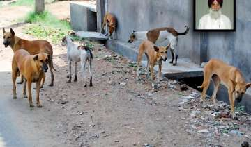 catch and send stray dogs to northeast says...