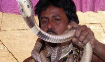 dead up youth bitten by snake returns home after...