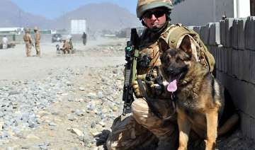 dog breed that sniffed out osama to help indian...