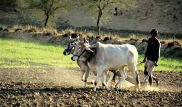 don t vote for congress ncp says vidarbha farmer...