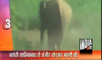 female elephant on the rampage in ghaziabad -...