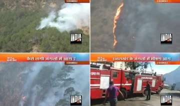 hundreds of trees plants gutted in forest fire in...
