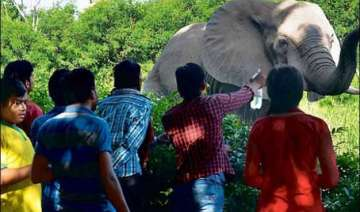 delhi zoo gets record 22 lakh visitors this...