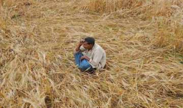 crop loss 2 farmers in aligarh die of shock over...