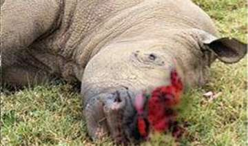 another rhino killed in assam s kaziranga...