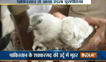 detained pakistani spy pigeon goes through x ray...