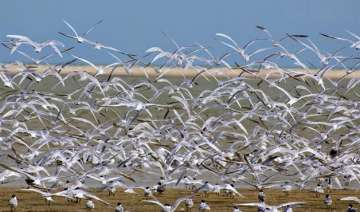 7.61 lakh birds thronged odisha s chilika lake...