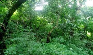 green cover in odisha threatened by mining -...