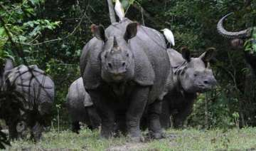 2 rhinos killed by poachers in kaziranga horns...