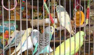 birds have fundamental rights can t be kept in...