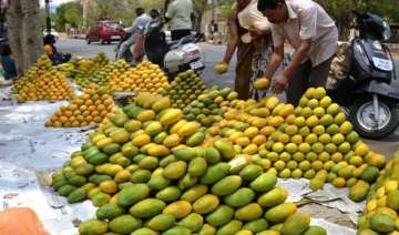 after unseasonal rains aam set to be a vip this...