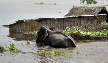 kaziranga park flooded - India TV