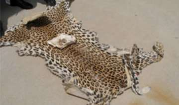man held with leopard skins - India TV