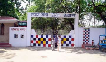 man jumps into tiger cage in patna zoo mauled -...