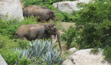 operation to push jumbos back into forest...
