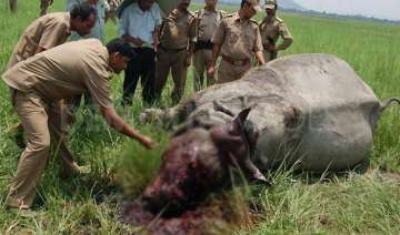 rhino killed by poachers in kaziranga national...