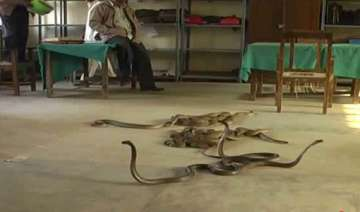 snake charmer releases snakes in up tehsil to...