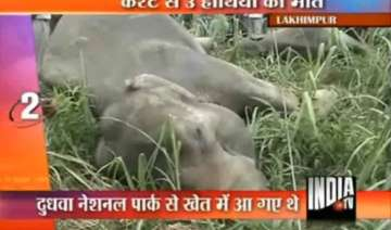 three elephants electrocuted in up - India TV