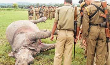 two rhinos killed in kaziranga horn of one...