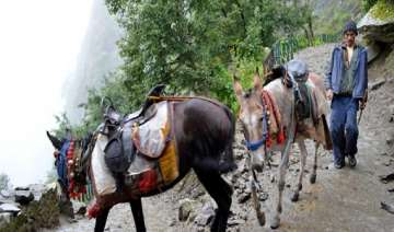 uttarakhand mule drivers turned bandits robbed...