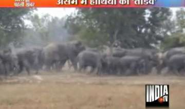wild elephants on the rampage in assam - India TV