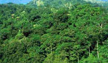 25 check dams built in jharkhand forest areas -...