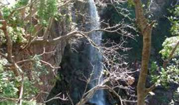 4 killed eight injured as tree branch falls on...