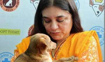 at a glance maneka gandhi from a charming model...